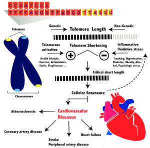 Telomere awareness