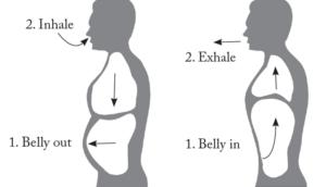 Deep Breathing cycle