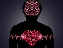 heart as little brain