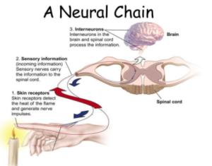 sense touch neural network