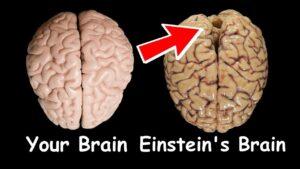 Extra ordinary brain of Einstein